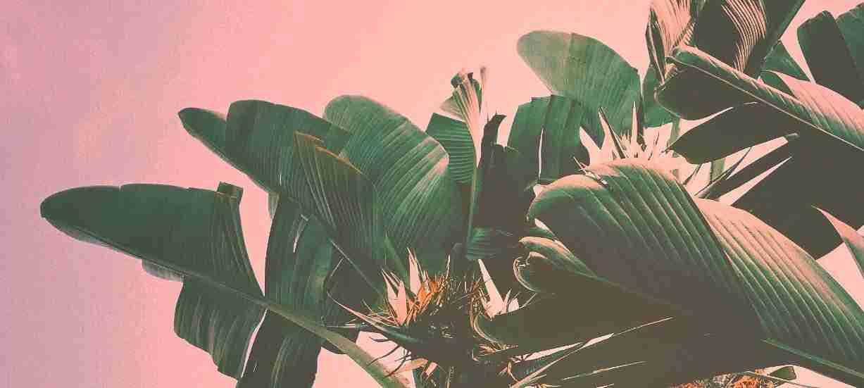 Beach Music - Ibiza Sunset Grooves
