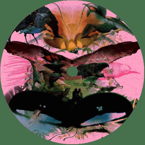 First Listen – Leon Vynehall 'Rojus' LP | New Music